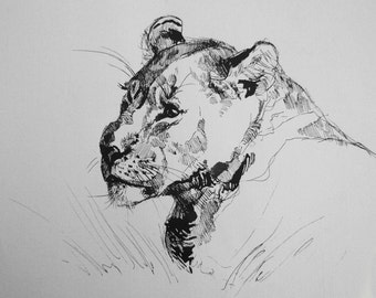 Lioness - original drawing