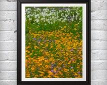 Flower Photography - A field of flowers white green purple photo art print