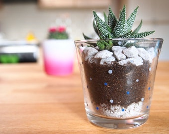 Succulent in decorated glass