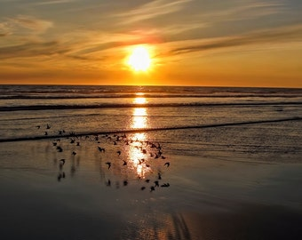 Pacific Sunset with Birds in Flight