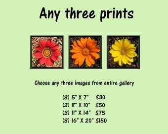 Any Three Images - Huge Savings, Discount, Wall Art, Wall Decor, Fine Art Photography, Flower Prints, Floral Decor, Travel Photography, Art