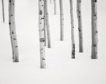 Rustic Black and White Photo, Cabin Art, Aspen Tree Photo, Living Room Wall Art, Minimalist Art, Black and White Print, Colorado Photography