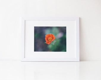 Orange Koi Avens flower, botanical fine art nature photography print, 5x7 8x10, fresh home decor, office wall art, unique fine art print
