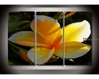 Yellow Frangipanis Floral Art Canvas oil painting Wall Art Decor Artwork