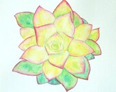 Succulent Plant Watercolor Painting Original Artwork