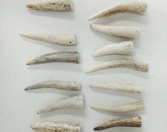 12 Fine Antler Tips Drilled Ready for Jewelry Making