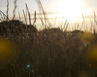 Straw and Flowers in Field - Digital Download - Photography by GemShort Photography