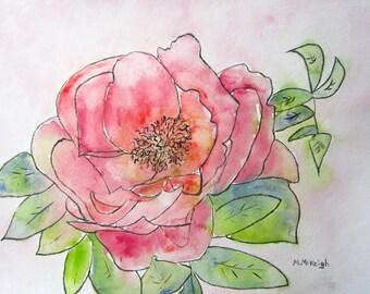 Peony Original watercolor and ink