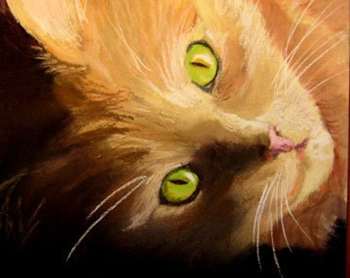 Orange and White Cat Portrait Drawing