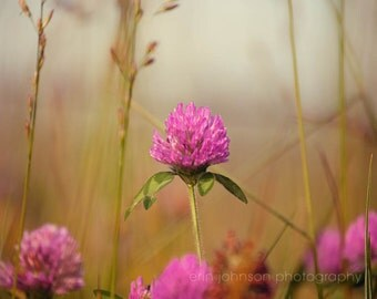 landscape photograph, spring home decor, cades cove gatlinburg tennessee, nature photography, flower photograph, pink wall art