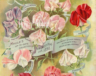 Digital download instant*Flower seed*Sweet Pea*Sewing*Cards*Greeting cards*Tags*Greeting  Cards*Frame*Collage*Decoupage