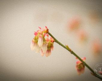 Saluda Blooms Print