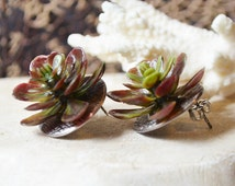 Hen And Chicks Earrings Made With Life Like Plastic Succculent