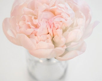 Soft Pastel Pink Peony, High Resolution Digital File, Instant Download Image, Printable Flower Photo, Nature Botanical Photography