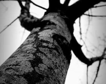 Dark & Twisty - Arms (black and white nature photography print, creepy spooky snarly tree trunk branches closeup perspective wall art decor)