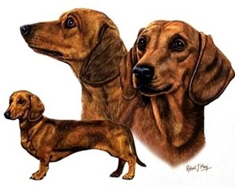 "DACHSHUND Red Smooth 3 Dogs on ONE 16 inch square Fabric Panel to Sew. Picture is 8x""  10""."