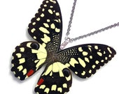 Real Butterfly Wing Necklace / Pendant (WHOLE Papilio Demoleus Butterfly - W120)