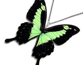 Real Butterfly Wing Necklace / Pendant (WHOLE Papilio Phorcas - W029)