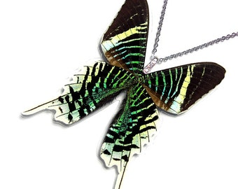 Real Butterfly Wing Necklace / Pendant (WHOLE Urania Leilus - W038)