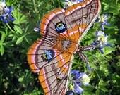 Polyphemus Moth Antheraea polyphemus Iron on or Sew on Patch