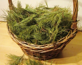 Pine Needles, Fresh Cut White Pine, Sacred Wood, Craft Supply, Medicinal Herbs, Incense, Wiccan Tools, Smudge, Purification, Pine Needle Tea