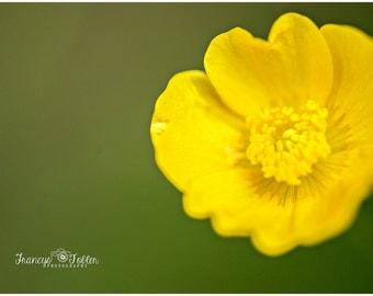 Spring Yellow Buttercup Flower Fine Art Canvas wrap- wild flowers