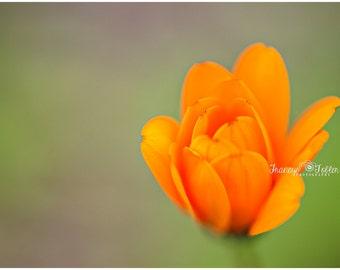 Spring Orange Blossom Flower Fine Art Canvas wrap- macro 3