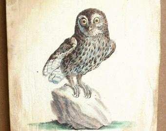 Baby Little Owl 5x7 art tile