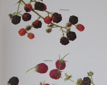 Rasberry/Blackberry, Color Plate, 7.75 x 11.5 in, Vintage Book Page Illustration by Marilena Pistoia, Unframed Print