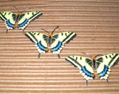 Reserved for Lisa MacDonald Vintage Enamel Butterfly Brooches