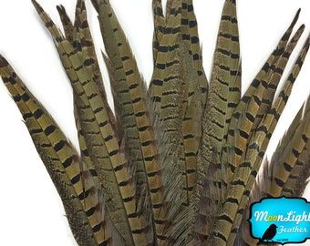 """Tail Feathers, 50 Pieces - 8-10"""" NATURAL Ringneck Pheasant Tail Wholesale Feathers (bulk) :3876"""
