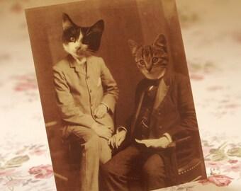 Mr. Mew & Dr. Fuzzle - Set of 5 Postcards