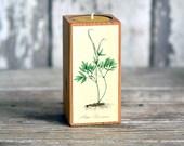 Colored Botanical Candleblock: No. 2, Smokestack Black Cohosh - by Peg and Awl