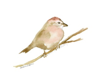 Sparrow Watercolor Painting - 10 x 8 Giclee Reproduction - Woodland Animal - Bird Art - 11x8.5