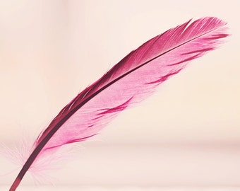 girl nursery art feather photograph pink feather baby girl nursery decor feather photography wall decor little girls room