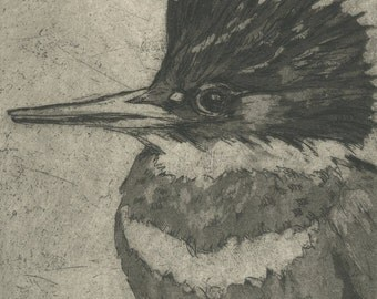 Night Heron / Kingfisher Diptych, Etching of Two Crested Birds