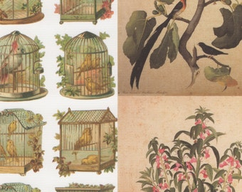 Vintage Style Botanicals and Birds 12x12 Art Papers for Decor, Collage, Gift Wrap and More
