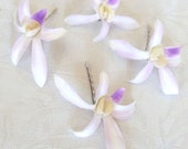 Orchid hair fascinators real touch Ceasar Dendrombium orchid hair pins bridal hair pin tropical fascinator