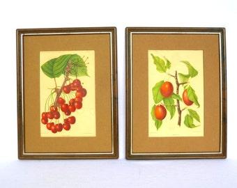 VINTAGE BOTANICAL Fruit PRINTS/ Cherries and Plums