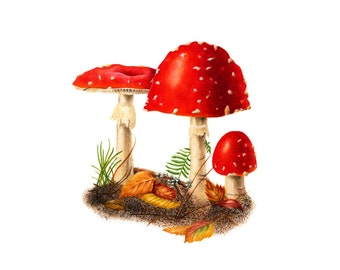 Red Mushrooms - Amanita muscaria, watercolor painting