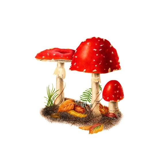 Red Mushrooms - Amanita muscaria, watercolor painting