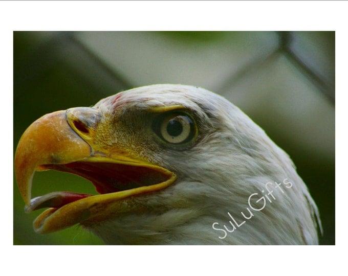 Eagle Eye - Digital Print