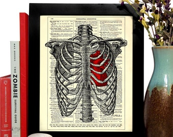Rib Cage With Anatomical Heart, Home, Dorm, Nursery, Office Decor, Wedding Gift, Eco Friendly Book Art, Vintage Dictionary Print, 8 x 10 in.