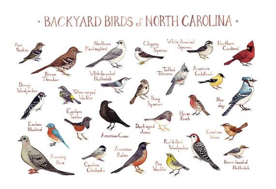 North Carolina Backyard Birds Field Guide Art Print