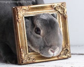 Bunny Rabbit Photo, Gold And Grey, Animal Art, Nursery Decor, Children's Room Art, Animal Portrait, Rabbit Art, Gold Home Decor, Wall Art