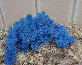 Reindeer Lichen-Blue
