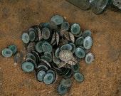 Beach Decor Seashells - 100 Turquoise Shells - Small Limpet Shells for Nautical Decor, Beach Weddings or Crafts