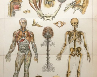 Original 1890s Antique Human Anatomy Dissection Bookplate Physiology Print Victorian Medical Diagram Veins Arteries Skeleton Eyeballs Organs