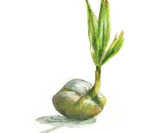 Watercolor Coconut, Coconut Palm Print