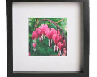 bleeding hearts flower,pink heart flower,pink flower,flower wall art,pink,flower,square print,fine art photography,green bokeh